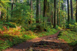 Sol Duc rainforest at Olympic National Park, Oregon Coast