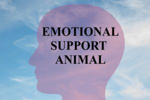 Emotional Support Animal concept